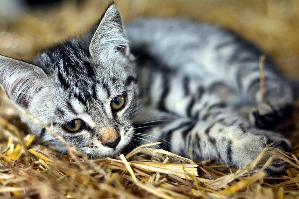 cat-3535266_1280.jpg